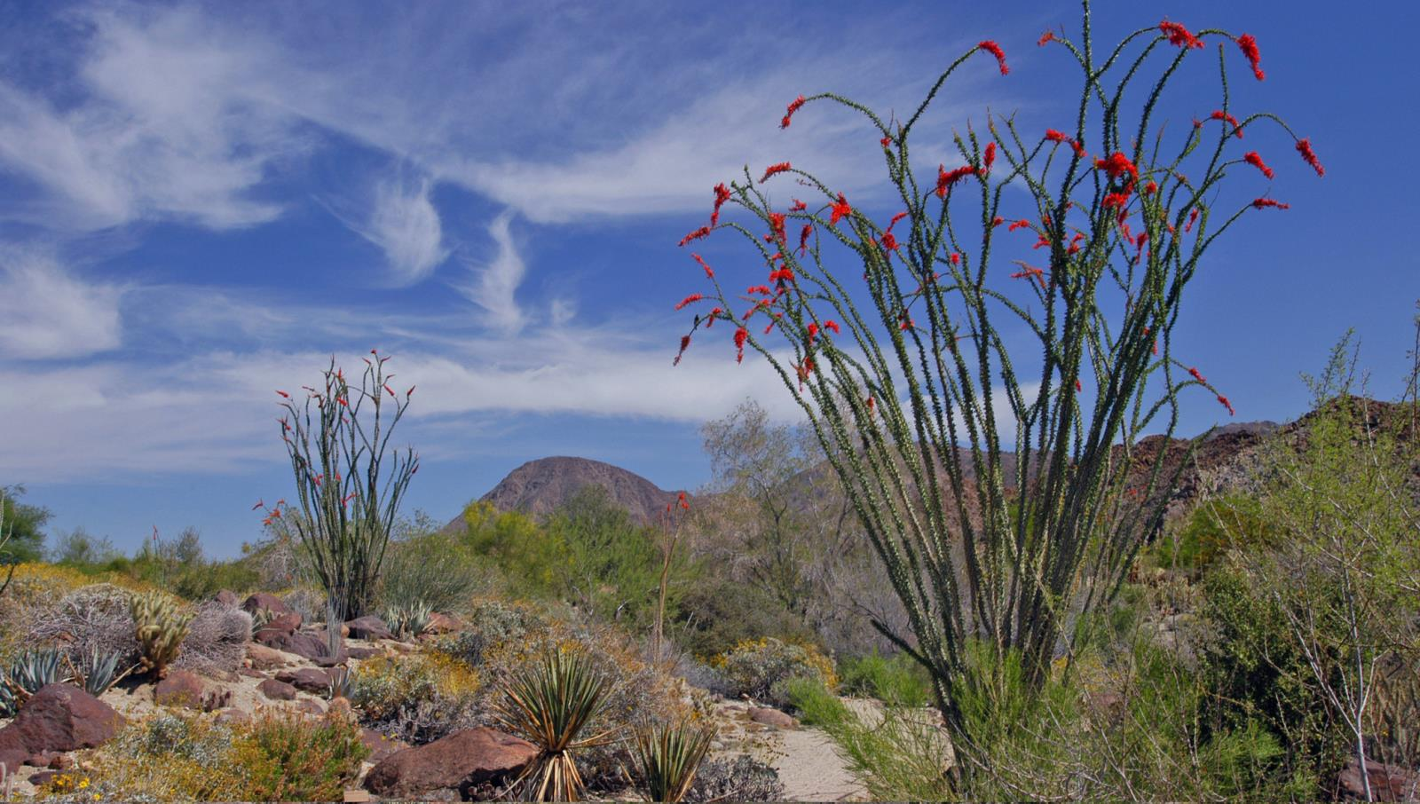 Living Desert Nature Trails